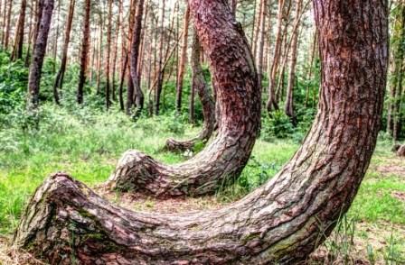 El Bosque De Gryfino Polonia Guia Del Trotamundos
