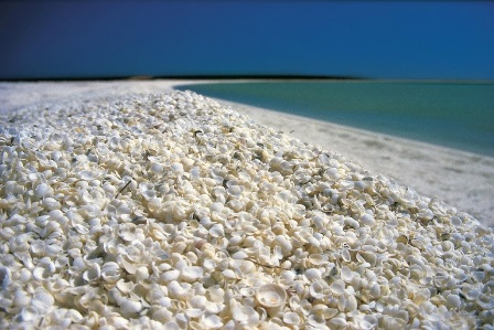 Shell Beach (Australia)