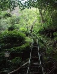 Las Haiku Stairs (Hawái) - haiku-stairs-2-231x300