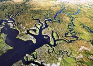 Everglades, el mar de pastos. - Everglades-formas-300x212