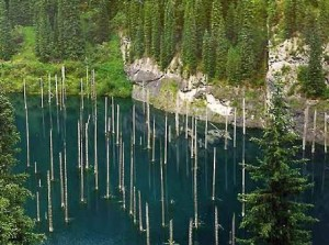 El bosque del lago - Lago-Traful-300x223