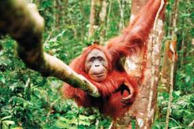 Sangkulirang-Mangkalihat en Kalimantan - the-most-beautiful-animal-picture-babies-of-beautiful-dangerous-animals-african-rainforest-animals-pictures-of-animals-that-live-in-the-tropical-rainforest-300x199