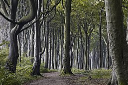El bosque de Nienhagen - 01AY-VJBA
