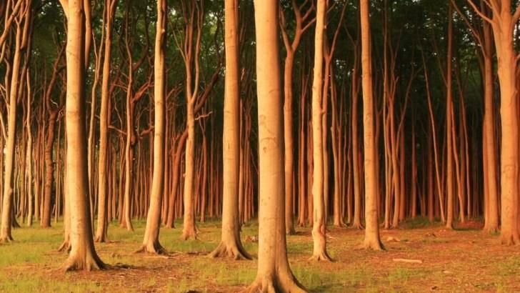 El bosque de Nienhagen