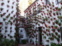 10 patios cordobeses que no te puedes perder - Martín-de-Roa-9-300x225