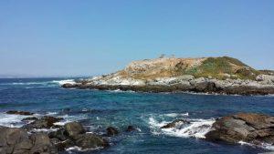 Monumento Natural Isla Cachagua - isla-los-pinguinos-cachagua-300x169
