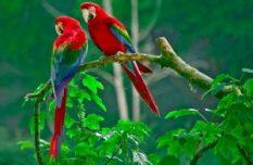 Los 5 destinos de viaje más trending - Costa-Rica-300x196