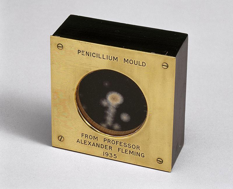 Fleming - Cultivo original de Fleming del moho Penicillium (4)