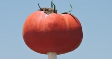 El Tomate - Imagen de El Tomate de Miajadas