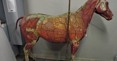 Museo Veterinario Complutense - Yegua realizada en cera.