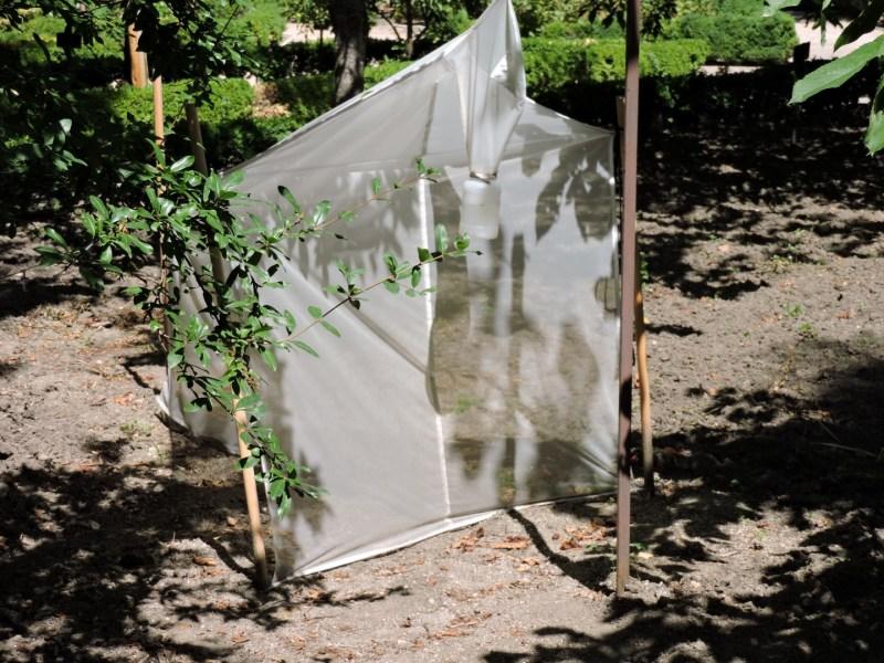 Jardín Botánico Madrid - Trampa para insectos ...