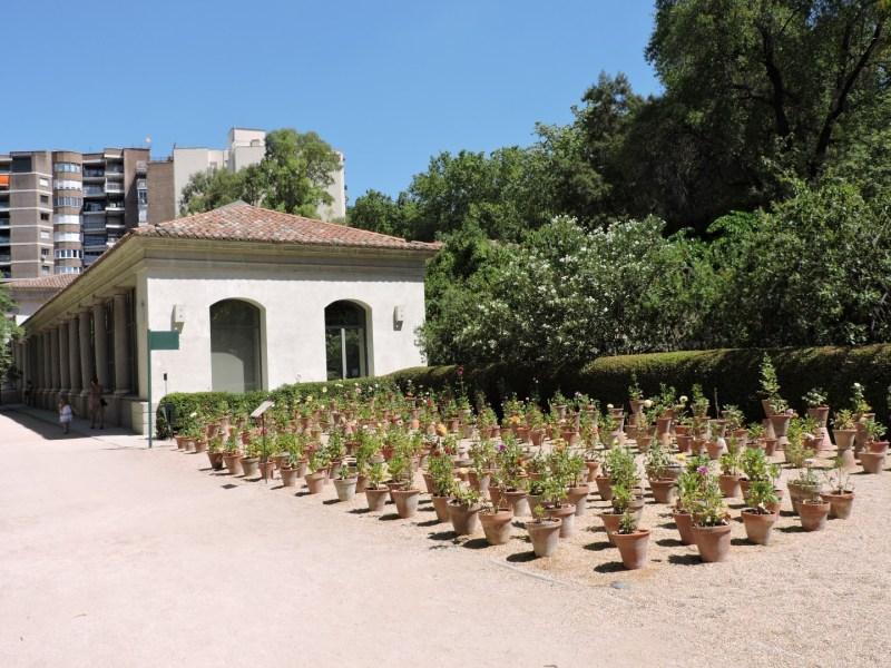 Jardín Botánico Madrid - Lateral del Edificio Villanueva, donde podemos ver actualmente un vivero.