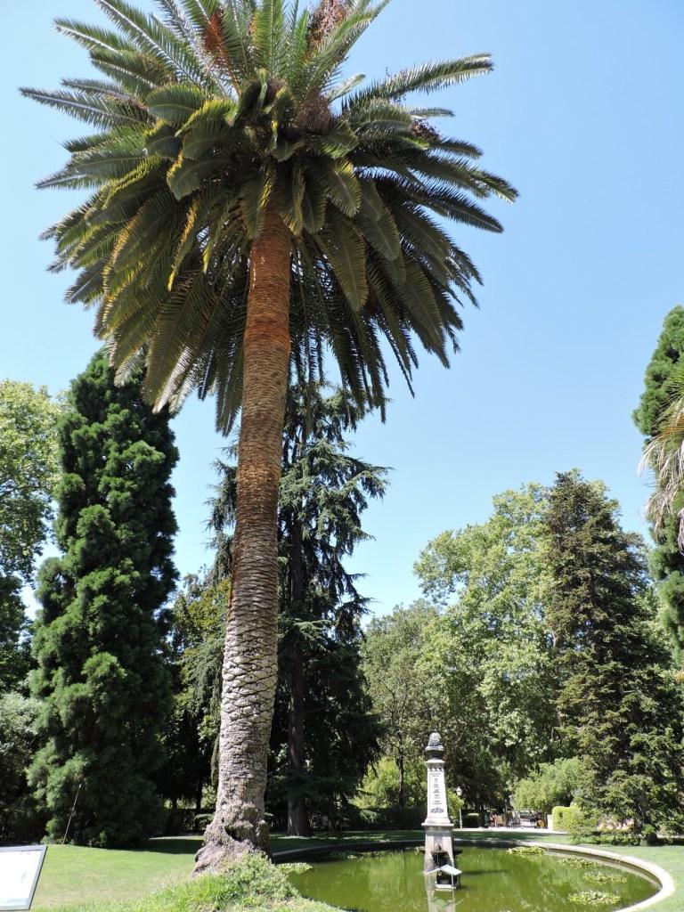 Jardín Botánico Madrid - Palmeras rodeando el edificio.