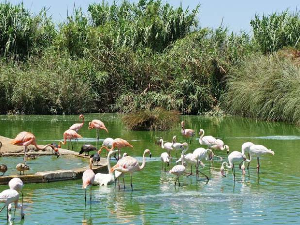 The Bird Park Malta