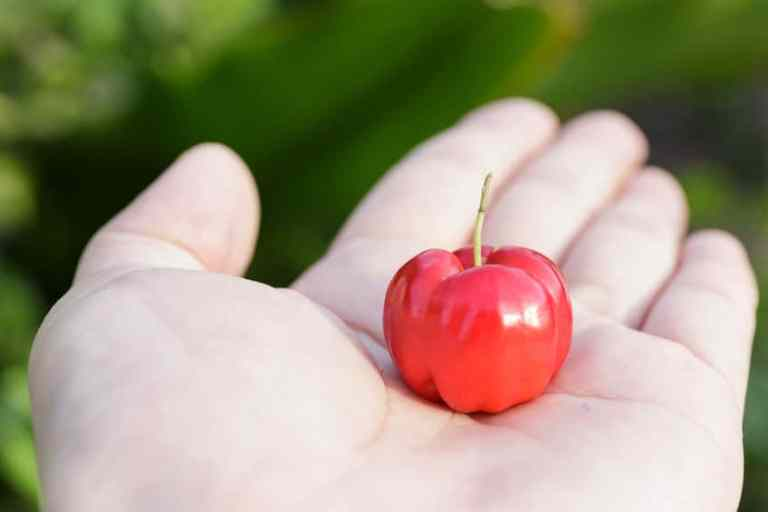 mano sosteniendo fruto de acerola