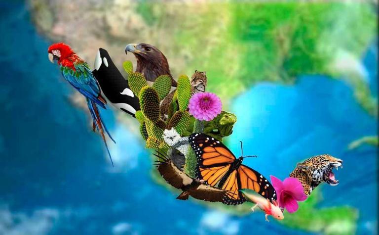 Biodiversidade no México