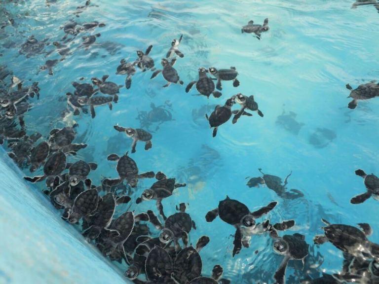 Isla de las Mujeres Cancun