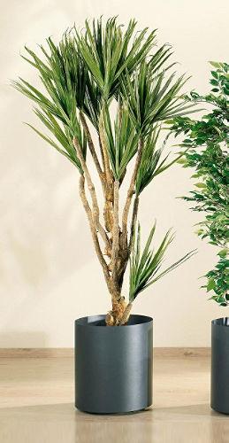 Rincones para tus plantas de interior