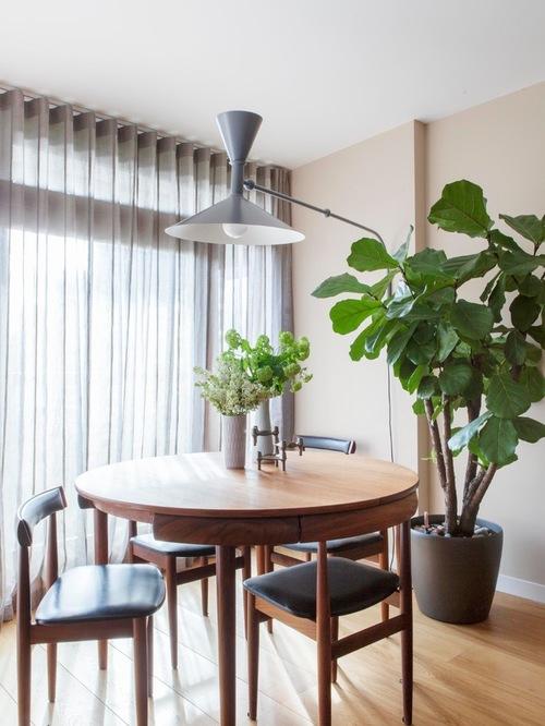 Cmo decorar con plantas de interior grandes