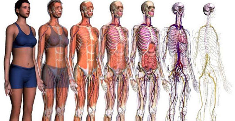 Técnico Superior Anatomía Patológica