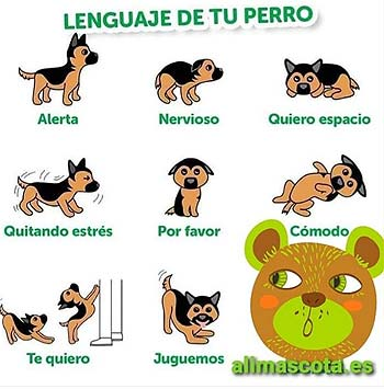 Trucos consejos para cuidar mascotas