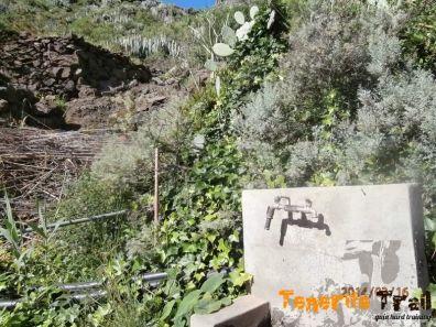 Detalle grifo en el barranco de Valleseco