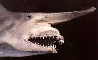 squalo goblin