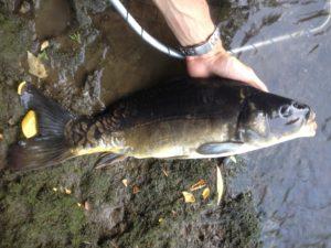 pescare col verme