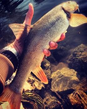 pescare in addetta