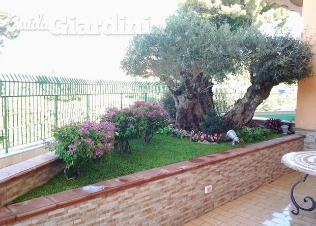 Immagini di NIVA Garden di Nicola Vaino giardiniere