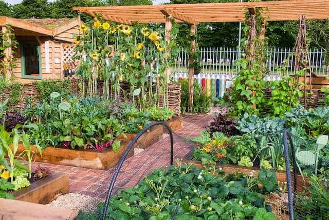 coltivare l'orto: consigli utili