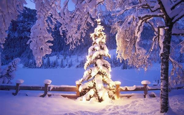 decorazioni invernali giardino