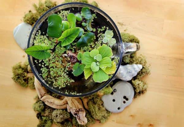 Giardini d acqua in miniatura guida giardino - Condizionatore perde acqua dentro casa ...