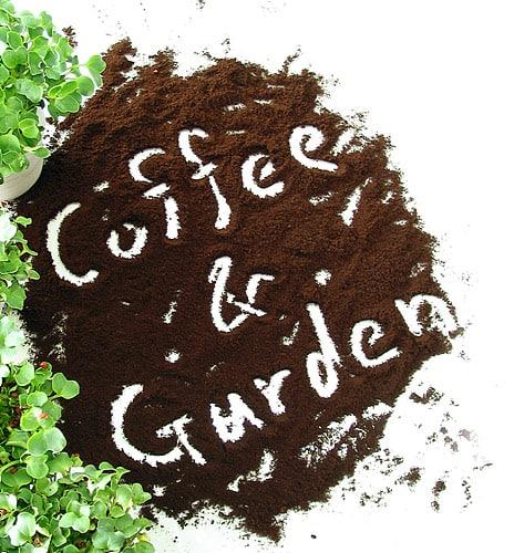 Riutilizzare i fondi del caffè in giardino