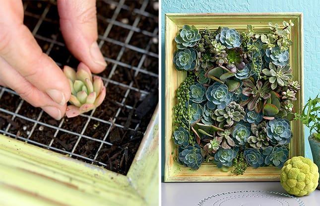 Realizzare delle fioriere fai da te è un buon punto di partenza per restituire ai propri ambienti esterni il rispetto. 14 Idee Fai Da Te Per Creare Bellissimi Giardini Verticali Guida Giardino