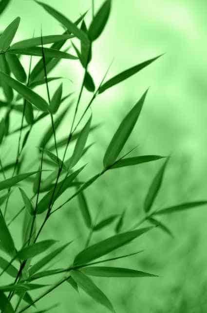 decorare il giardino con le piante di bambu