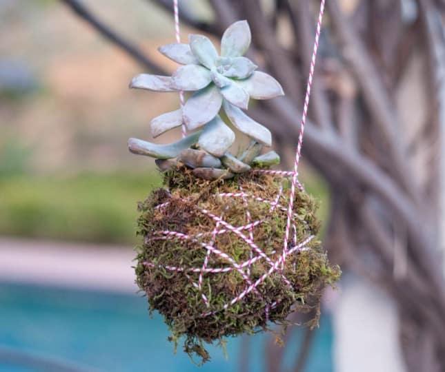 creare una fioriera pendente per piantine grasse