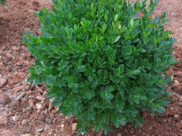 Idee e trucchi per coltivare spezie ed erbe aromatiche - Idee piante da giardino ...