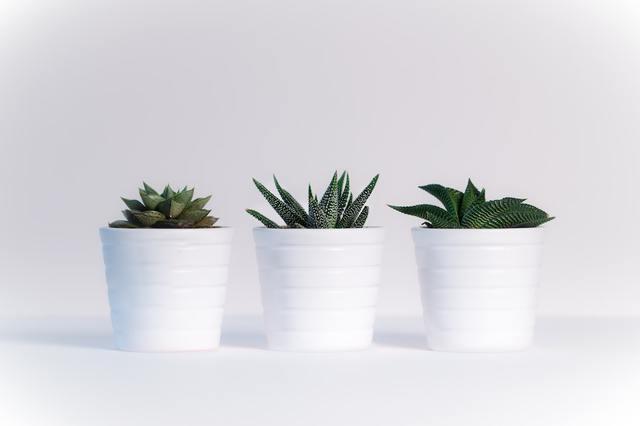 5 suggerimenti per coltivare le piante grasse