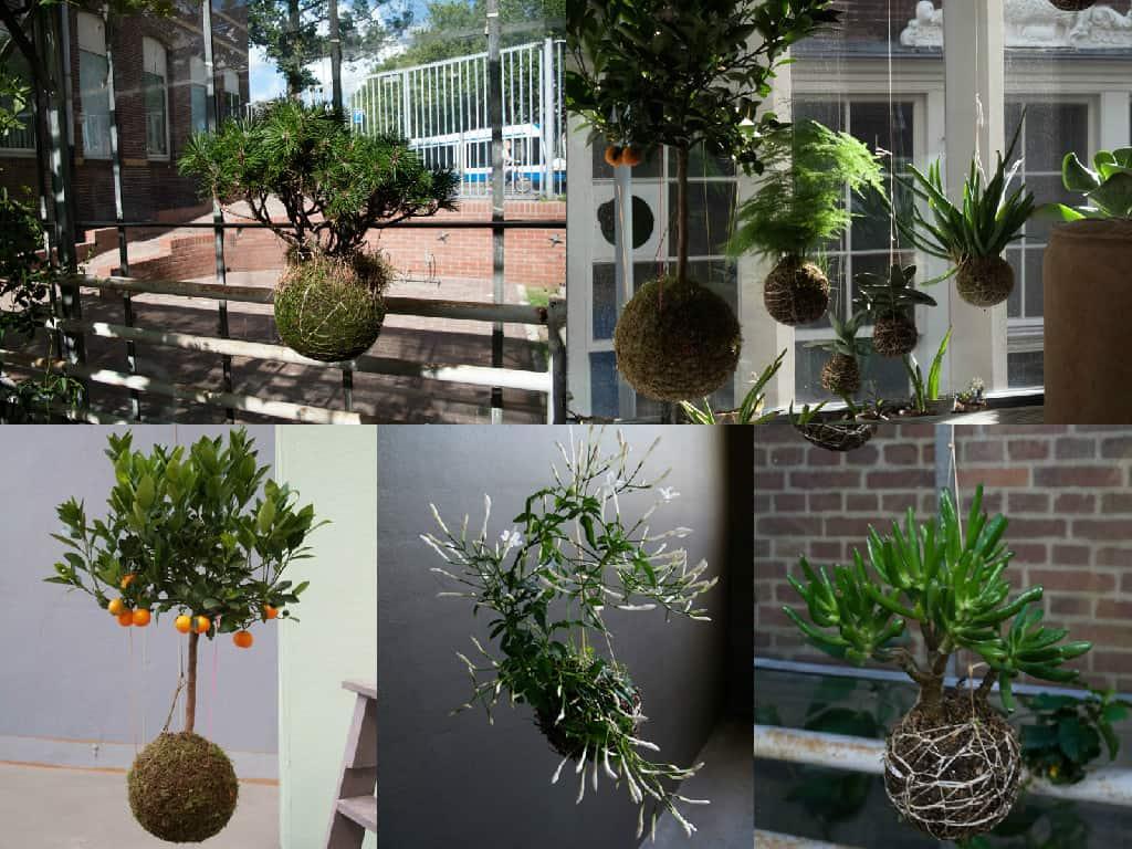 Come realizzare un kokedama piante pensili senza vaso for Orto pensile fai da te