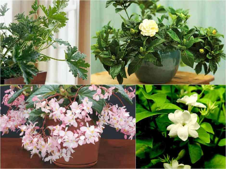 8 piante ideali per profumare la casa