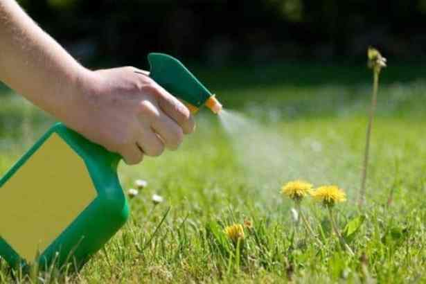 come-fare-un-diserbante-ecologico_8b20d9118669ceca583a4a65aaf33dbc