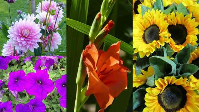 10 stupendi fiori da piantare in primavera guida giardino for Giardino fiori