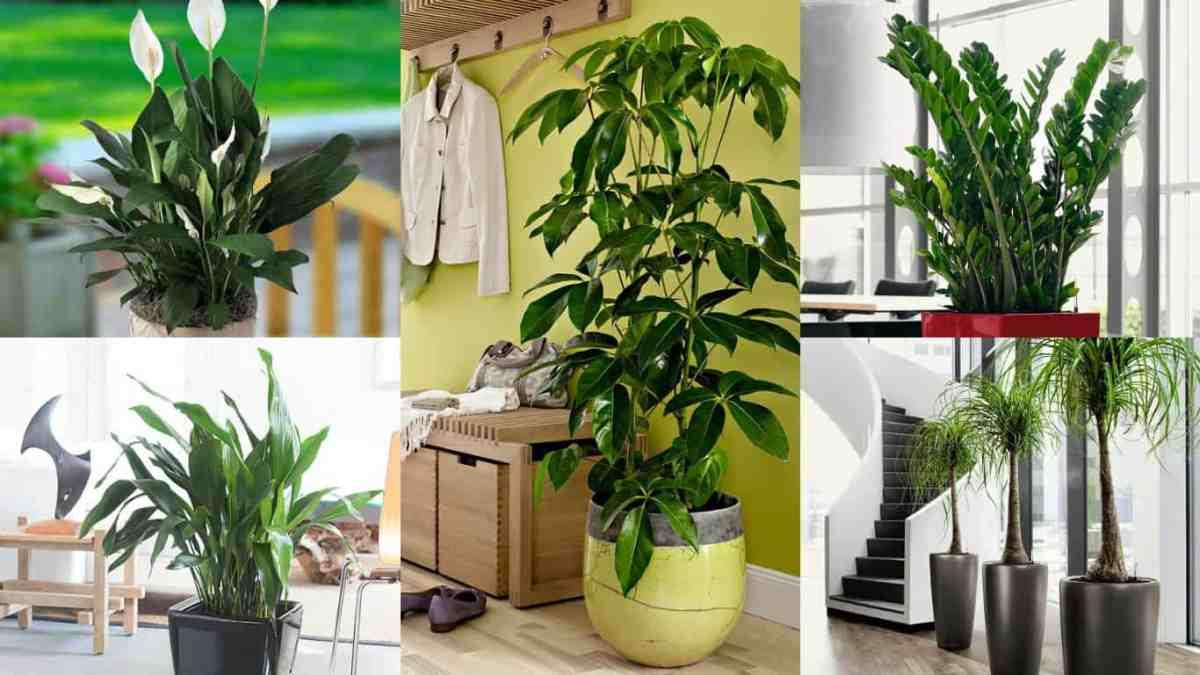 18 piante d'appartamento che non richiedono manutenzione