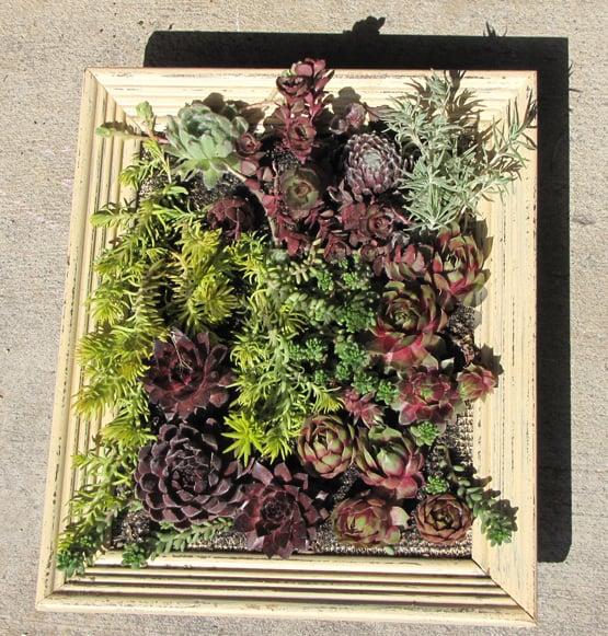 Come realizzare un \u201cquadro verde\u201d con le piante grasse