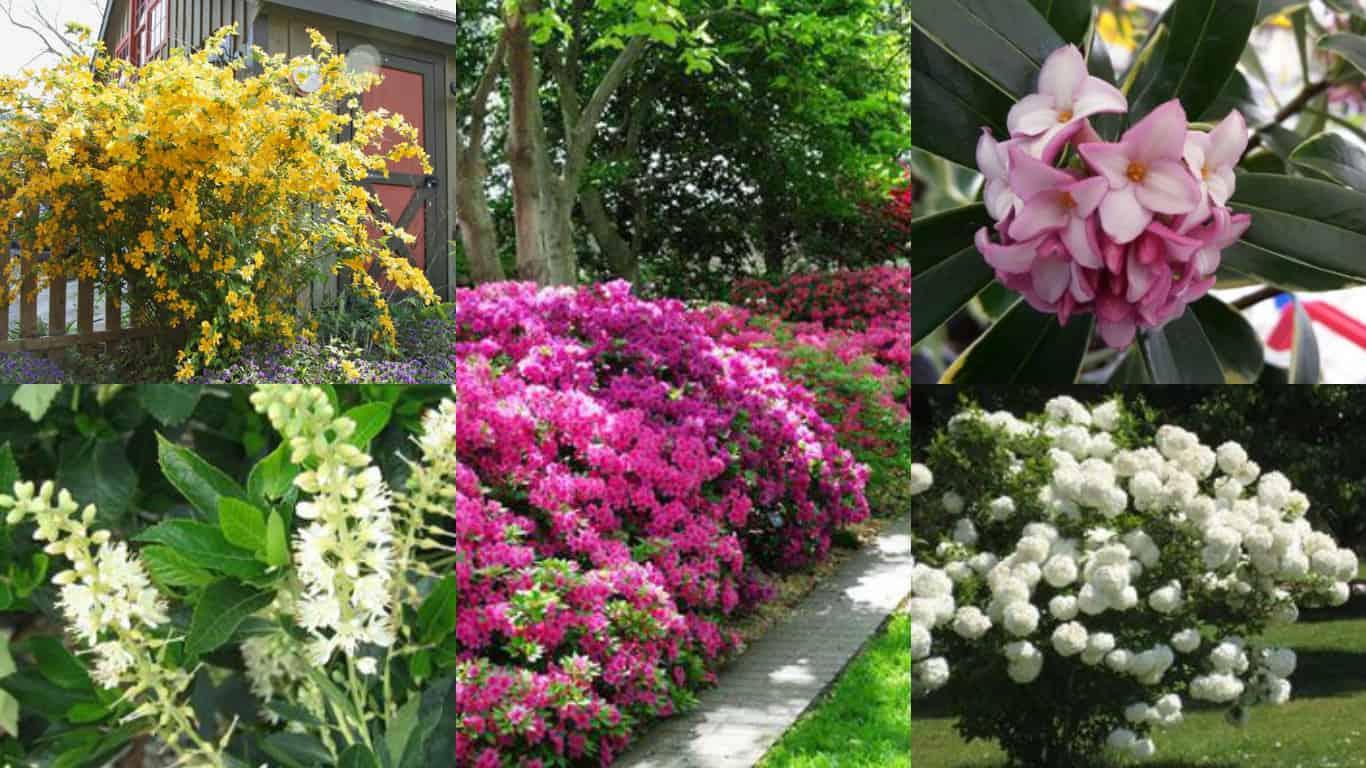 Fiori Perenni Da Balcone 12 arbusti ideali per la coltivazione in ombra - guida giardino