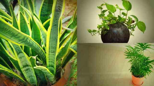 Piante Da Bagno Poca Luce : Piante d appartamento in grado di crescere bene anche