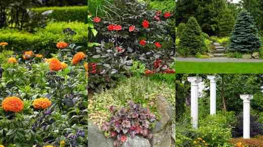 Guida giardino sito dedicato al mondo del giardino for Abbellire giardino casa