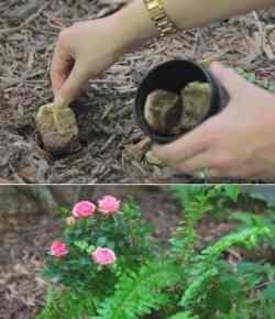 7 usi delle bustine di té nella cura del giardino