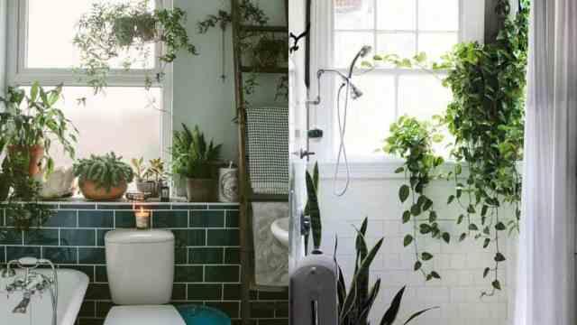 Decorare con le piante quali coltivare in bagno guida - Piante in bagno ...